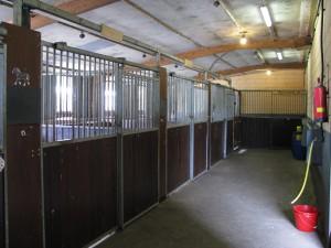 Ruime paarden boxen